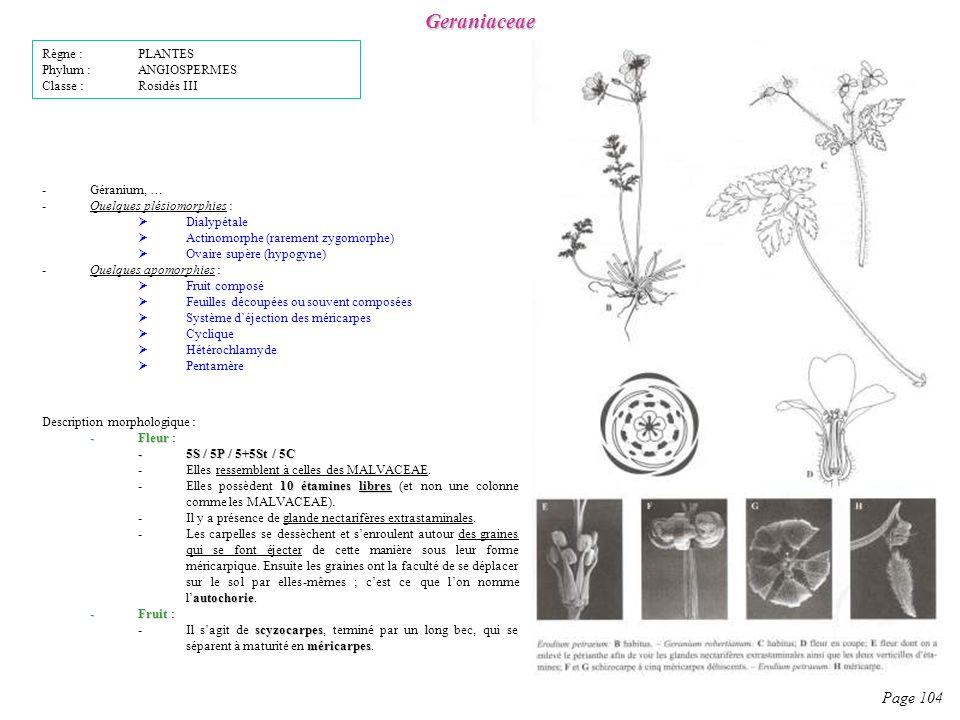 Geraniaceae Page 104 Description morphologique : -Fleur -Fleur : -5S / 5P / 5+5St / 5C -Elles ressemblent à celles des MALVACEAE.