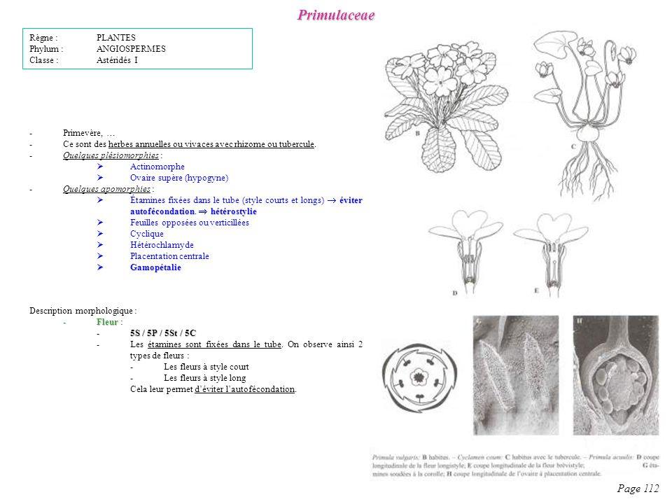 Primulaceae Page 112 Description morphologique : -Fleur -Fleur : -5S / 5P / 5St / 5C -Les étamines sont fixées dans le tube.