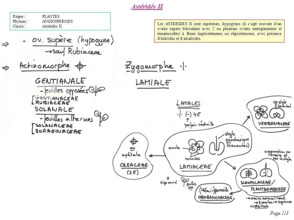 Astéridés II Page 113 Règne : PLANTES Phylum : ANGIOSPERMES Classe : Astéridés II Les ASTERIDES II sont supérieurs, hypogynes (il sagit souvent dun ovaire supère biloculaire avec 2 ou plusieurs ovules unitégumentés et ténuinucellés) à fleurs haplostémones ou oligostémones, avec présence diridoïdes et dalcaloïdes.