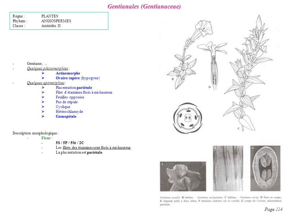 Gentianales (Gentianaceae) Page 114 Description morphologique : -Fleur -Fleur : -5S / 5P / 5St / 2C -Les filets des étamines sont fixés à mi-hauteur.