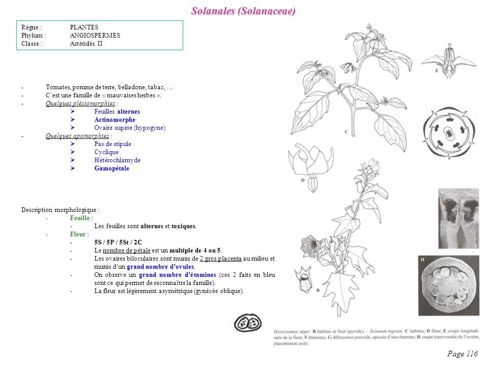 Solanales (Solanaceae) Page 116 Description morphologique : -Feuille -Feuille : alternestoxiques -Les feuilles sont alternes et toxiques.