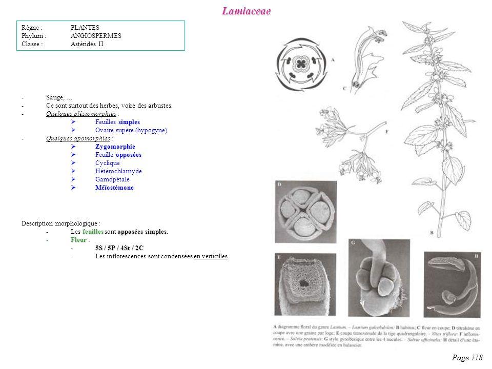 Lamiaceae Page 118 Description morphologique : feuillesopposées simples -Les feuilles sont opposées simples.