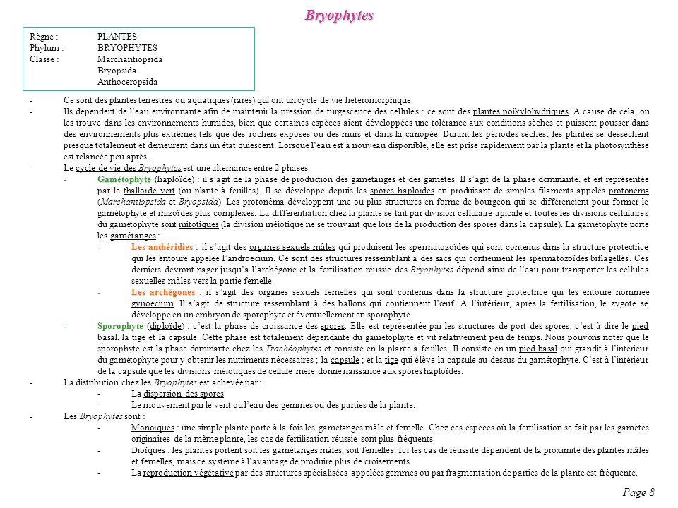 Bryophytes Règne : PLANTES Phylum : BRYOPHYTES Classe : Marchantiopsida Bryopsida Anthoceropsida -Ce sont des plantes terrestres ou aquatiques (rares) qui ont un cycle de vie hétéromorphique.