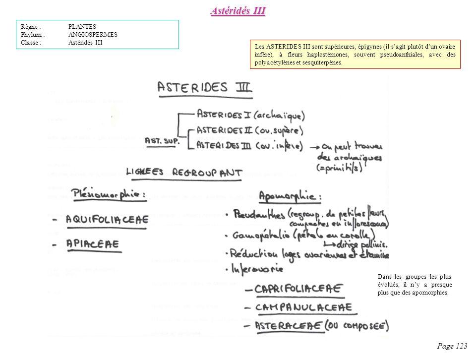 Astéridés III Page 123 Règne : PLANTES Phylum : ANGIOSPERMES Classe : Astéridés III Les ASTERIDES III sont supérieures, épigynes (il sagit plutôt dun ovaire infère), à fleurs haplostémones, souvent pseudoanthiales, avec des polyacétylènes et sesquiterpènes.