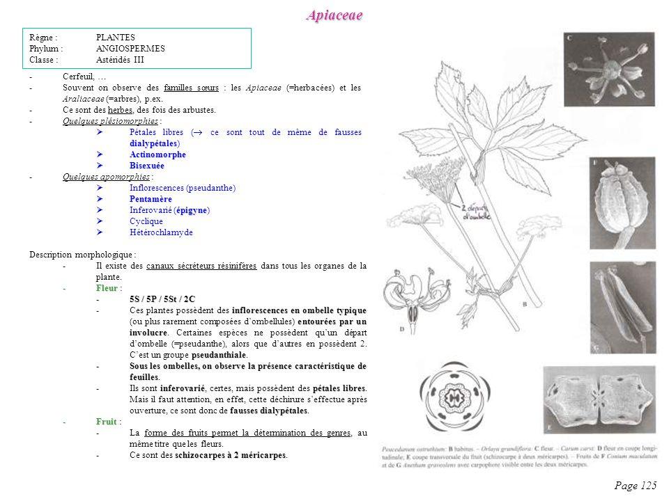 Apiaceae Page 125 Description morphologique : -Il existe des canaux sécréteurs résinifères dans tous les organes de la plante.