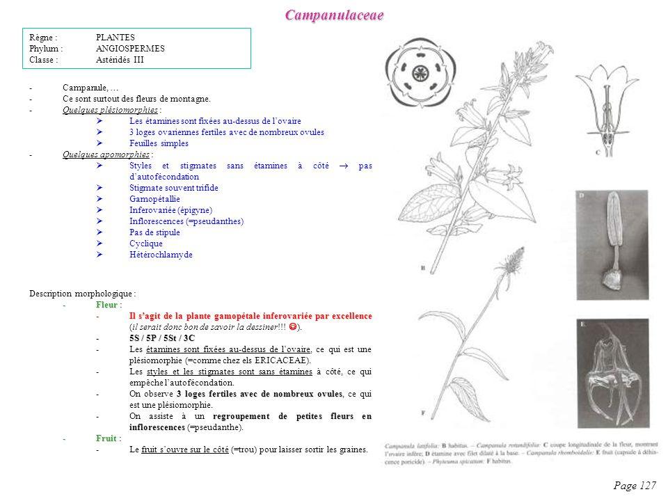 Campanulaceae Page 127 Description morphologique : -Fleur -Fleur : -Il sagit de la plante gamopétale inferovariée par excellence -Il sagit de la plante gamopétale inferovariée par excellence (il serait donc bon de savoir la dessiner!!.