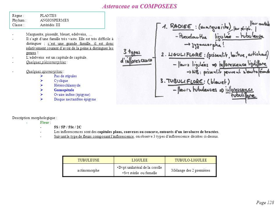 Asteraceae ou COMPOSEES Page 128 -Marguerite, pissenlit, bleuet, edelweiss, … -Il sagit dune famille très vaste.