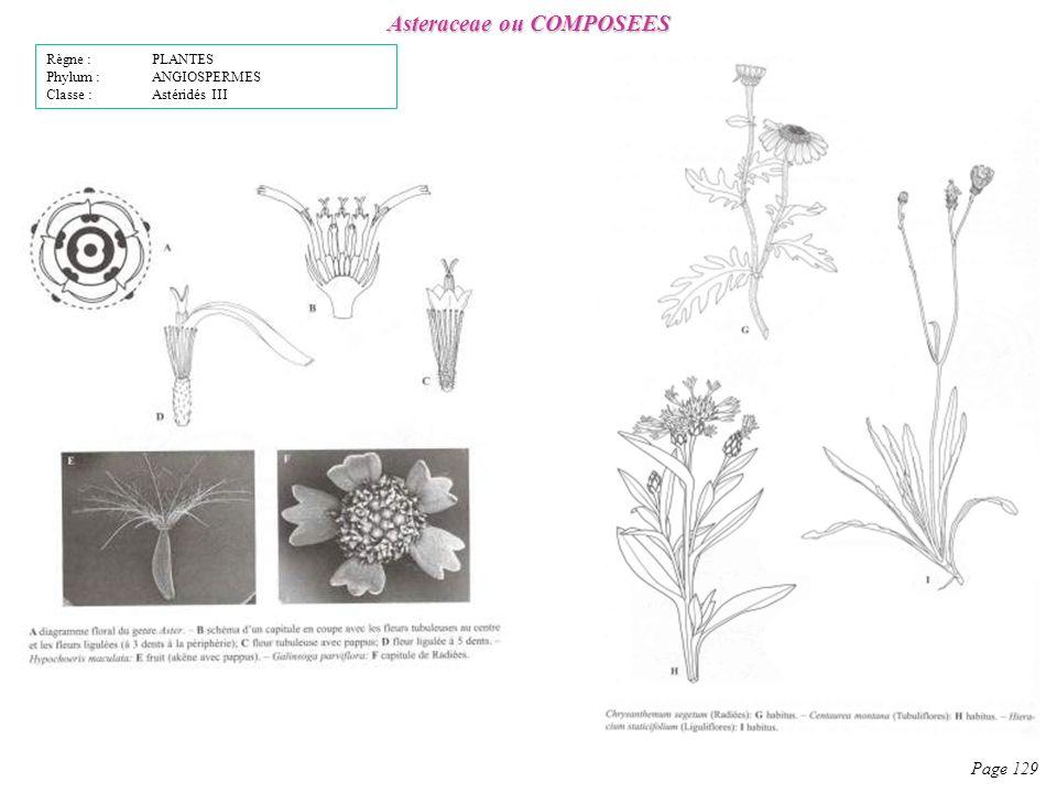 Asteraceae ou COMPOSEES Page 129 Règne : PLANTES Phylum : ANGIOSPERMES Classe : Astéridés III