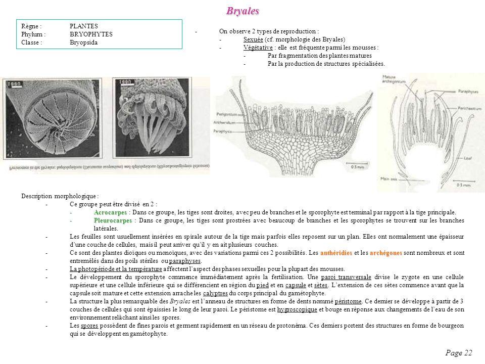 Bryales Page 22 -On observe 2 types de reproduction : -Sexuée (cf.