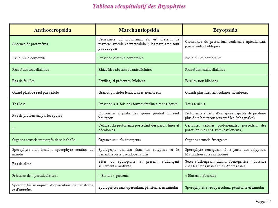 Tableau récapitulatif des Bryophytes Page 24 AnthoceropsidaMarchantiopsidaBryopsida Absence de protonéma Croissance du protonéma, sil est présent, de manière apicale et intercalaire ; les parois ne sont pas obliques Croissance du protonéma seulement apicalement, parois surtout obliques Pas dhuile corporellePrésence dhuiles corporellesPas dhuiles corporelles Rhizoïdes unicellulairesRhizoïdes absents ou unicellulairesRhizoïdes multicellulaires Pas Pas de feuillesFeuilles, si présentes, bilobéesFeuilles non bilobées Grand plastide seul par celluleGrands plastides lenticulaires nombreux ThallosePrésence à la fois des formes feuillues et thalliquesTous feuillus Pas Pas de protonema par les spores Protonéma à partir des spores produit un seul bourgeon Protonéma à partir dun spore capable de produire plus dun bourgeon (excepté les Sphagnales) -- Cellules du protonéma possèdent des parois fines et décolorées Certaines cellules protonémales possèdent des parois brunies épaissies (caulonéma) Organes sexuels immergés dans le thalleOrganes sexuels émergents Sporophyte non limité : sporophyte continu de grandir Sporophyte contenu dans les calyptres et le périanthe ou le pseudopérianthe Sporophyte émergeant tôt à partir des calyptres.