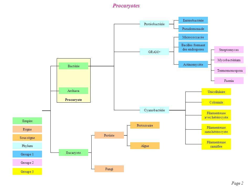 Euphorbiaceae Page 96 Description morphologique : -0-3-5-nS / 0P / 1-nSt3C -0-3-5-nS / 0P / 1-nSt ou 3C -Ce sont aussi bien des herbes que des arbres.