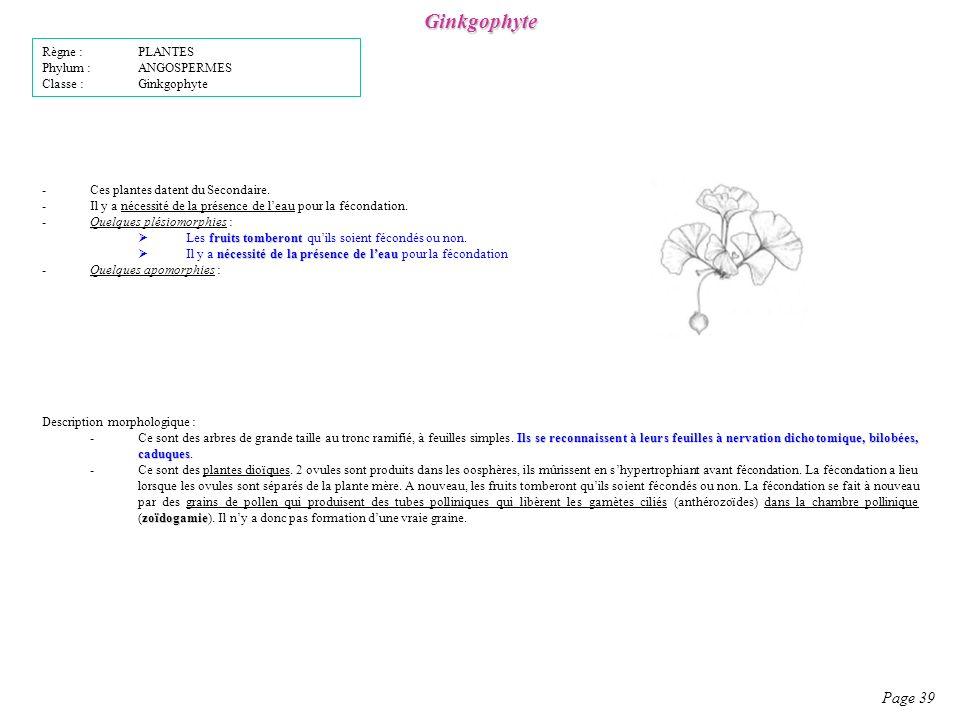 Ginkgophyte -Ces plantes datent du Secondaire.