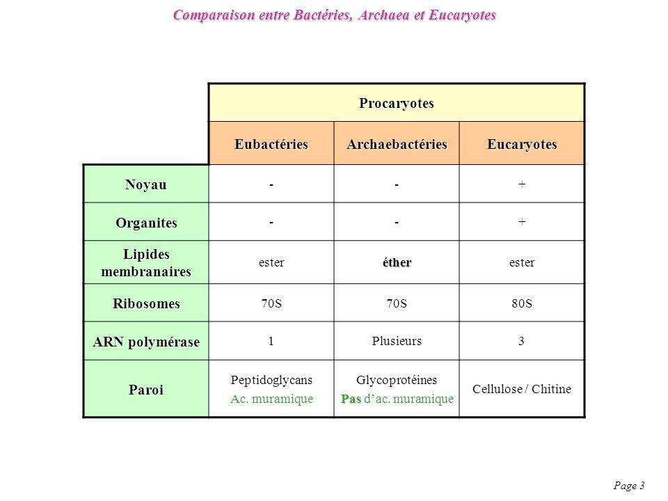 Comparaison entre Bactéries, Archaea et Eucaryotes Page 3 Procaryotes EubactériesArchaebactériesEucaryotes Noyau --+ Organites --+ Lipides membranaires esteréther Ribosomes 70S 80S ARN polymérase 1Plusieurs3 Paroi Peptidoglycans Ac.