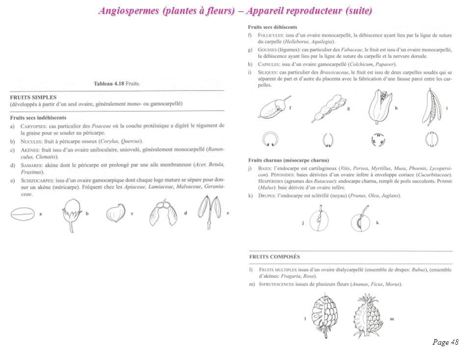 Angiospermes (plantes à fleurs) – Appareil reproducteur (suite) Page 48