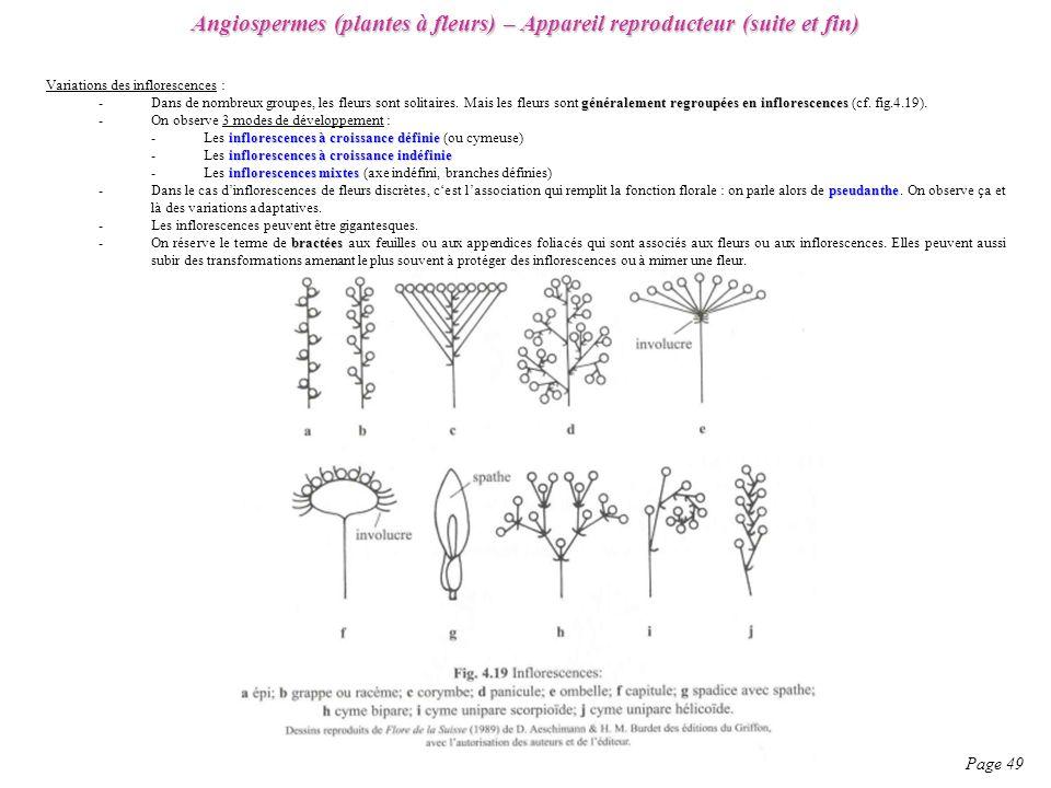 Angiospermes (plantes à fleurs) – Appareil reproducteur (suite et fin) Page 49 Variations des inflorescences : généralement regroupées en inflorescences -Dans de nombreux groupes, les fleurs sont solitaires.