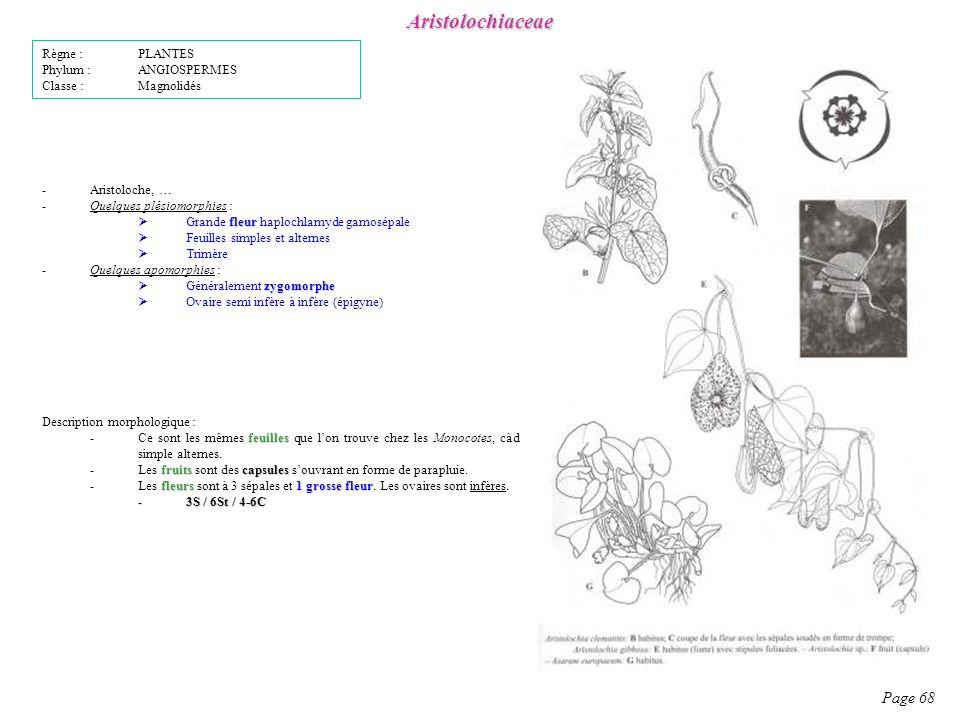 Aristolochiaceae Page 68 Description morphologique : feuilles -Ce sont les mêmes feuilles que lon trouve chez les Monocotes, càd simple alternes.