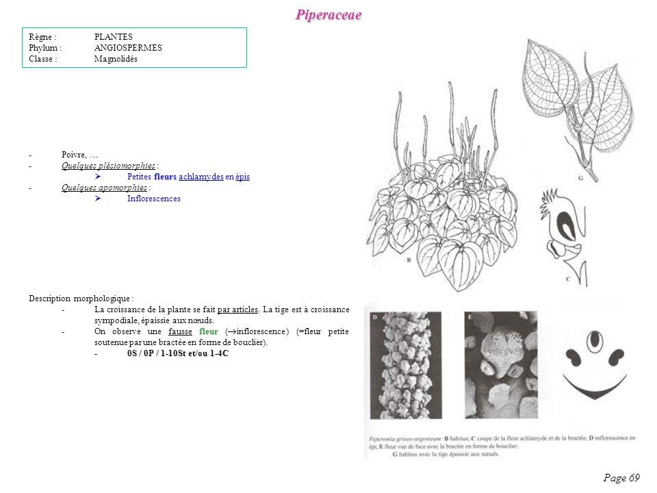 Piperaceae Page 69 Description morphologique : -La croissance de la plante se fait par articles.