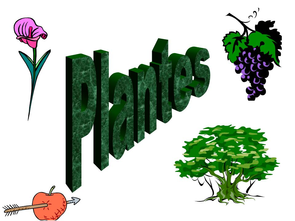 Sphaerocarpales Page 14 Description morphologique : -Ce sont des plantes avec un thalle.
