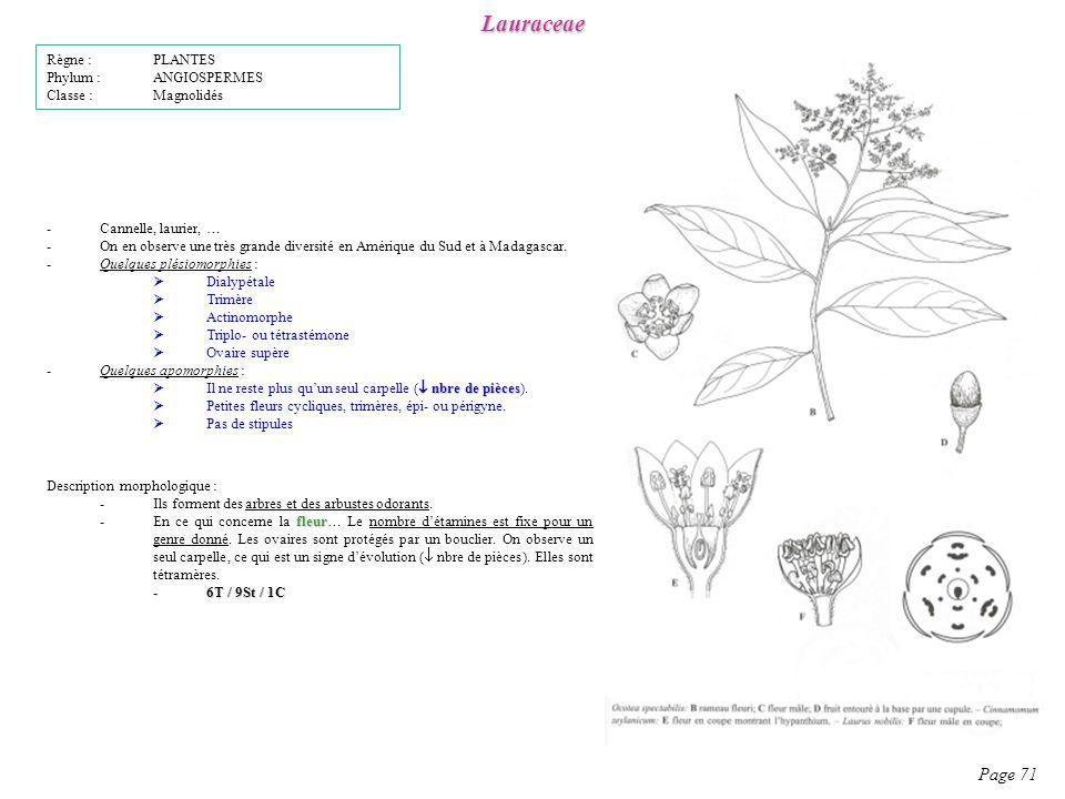 Lauraceae Page 71 Description morphologique : -Ils forment des arbres et des arbustes odorants.