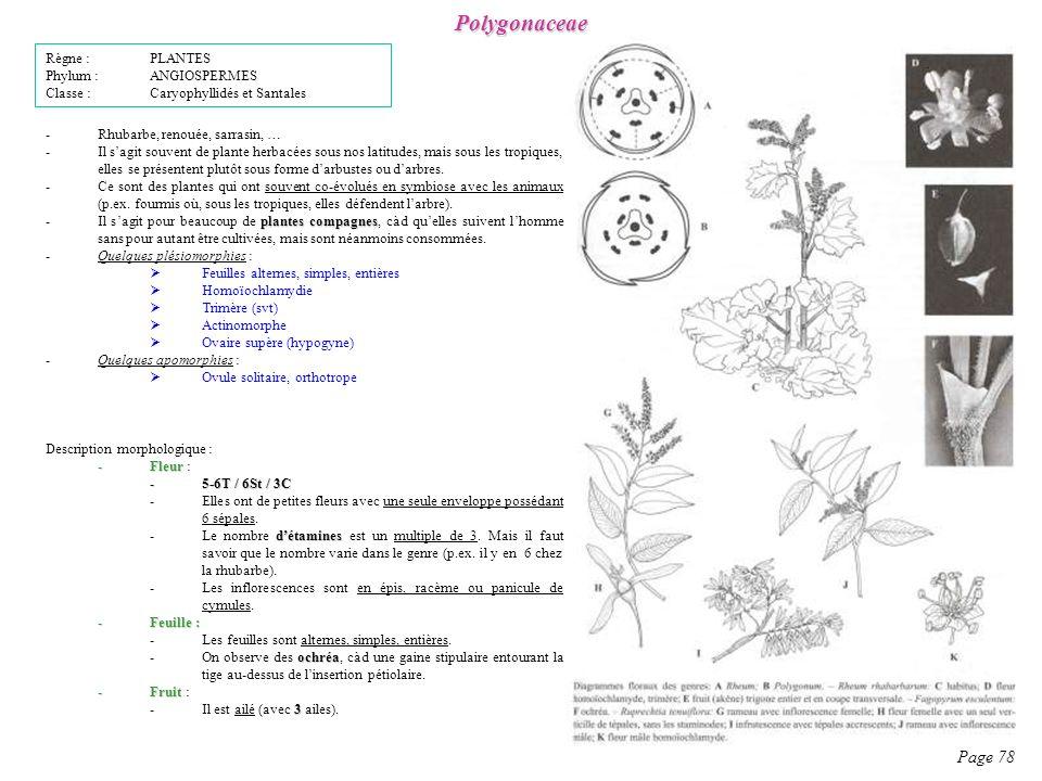 Polygonaceae Page 78 Description morphologique : -Fleur -Fleur : -5-6T / 6St / 3C -Elles ont de petites fleurs avec une seule enveloppe possédant 6 sépales.