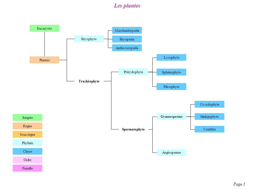 Angiospermes (plantes à fleurs) – Plésiomorphies et Apomorphies Page 50
