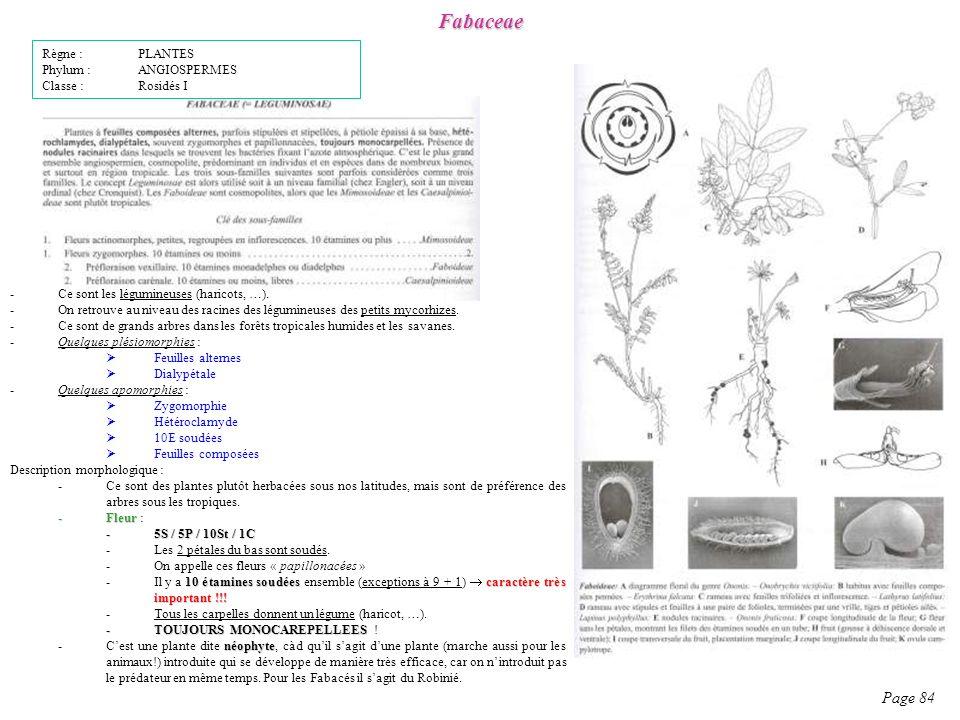 Fabaceae Page 84 Description morphologique : -Ce sont des plantes plutôt herbacées sous nos latitudes, mais sont de préférence des arbres sous les tropiques.