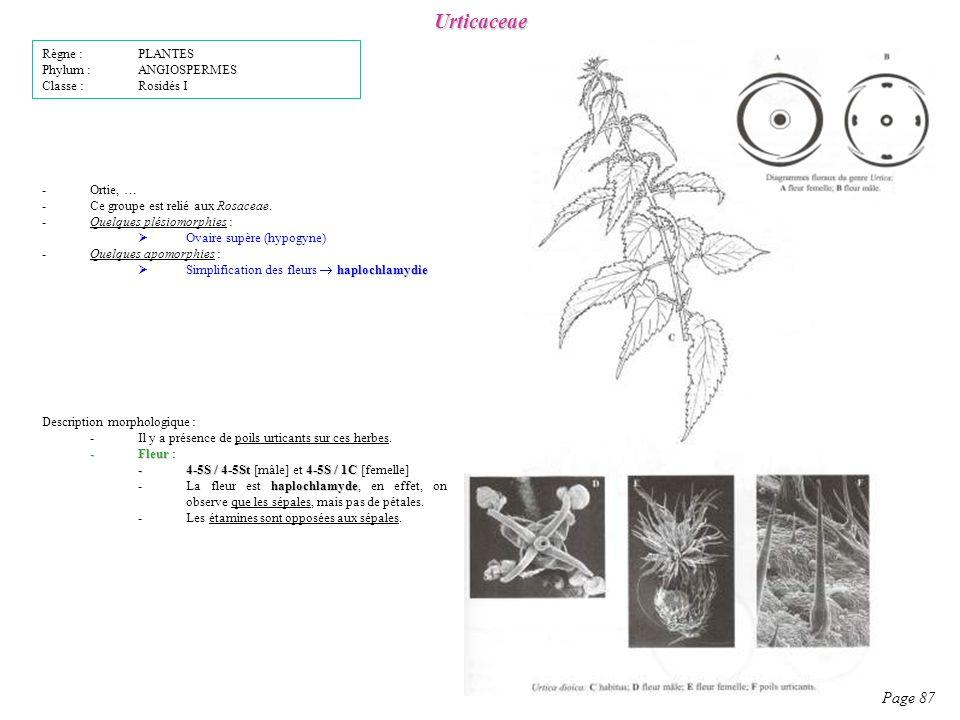 Urticaceae Page 87 Description morphologique : -Il y a présence de poils urticants sur ces herbes.