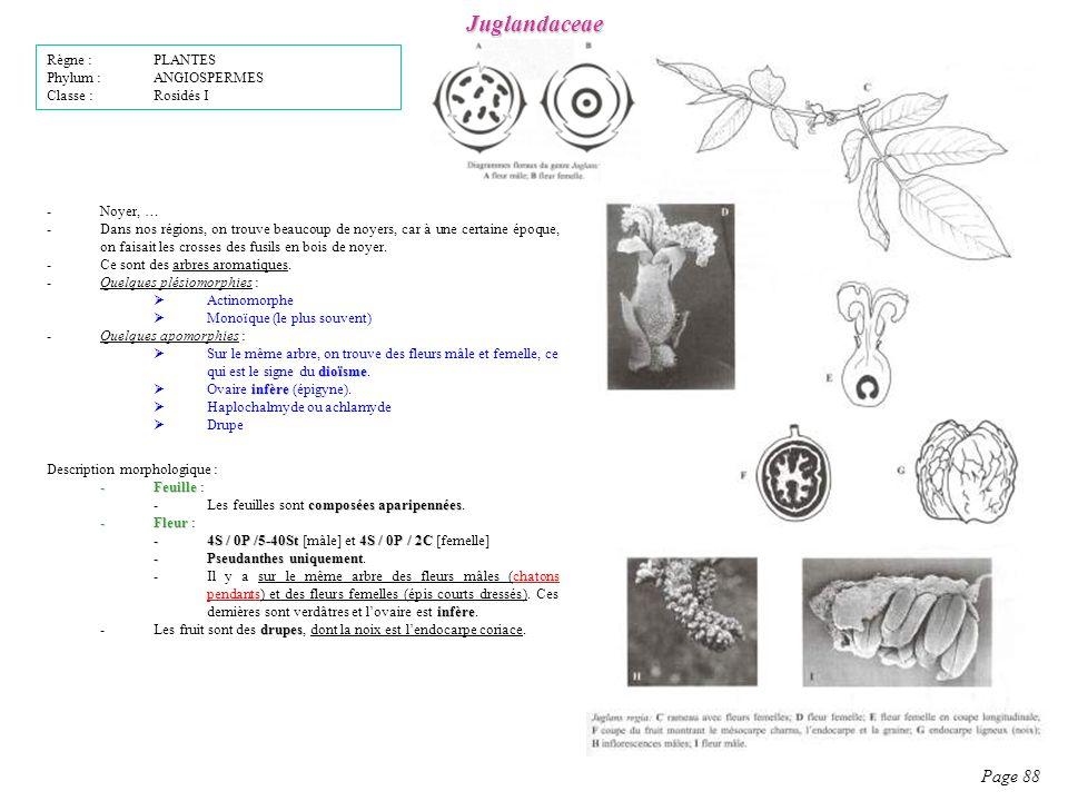 Juglandaceae Page 88 Description morphologique : -Feuille -Feuille : composées aparipennées -Les feuilles sont composées aparipennées.