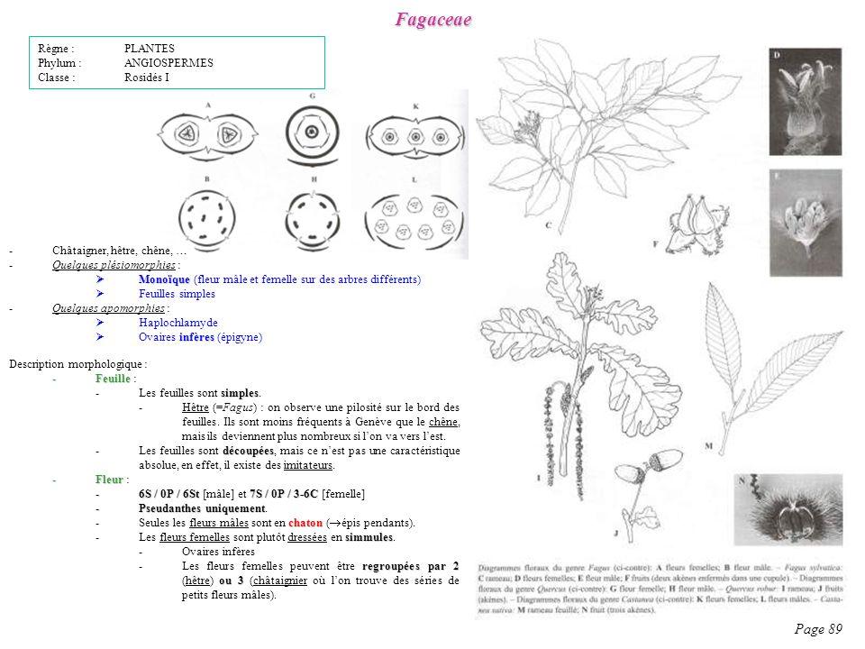 Fagaceae Page 89 Description morphologique : -Feuille -Feuille : simples -Les feuilles sont simples.