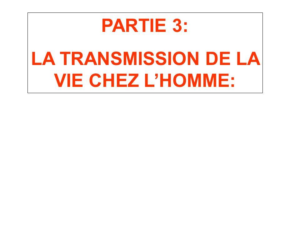 PARTIE 3: LA TRANSMISSION DE LA VIE CHEZ LHOMME: