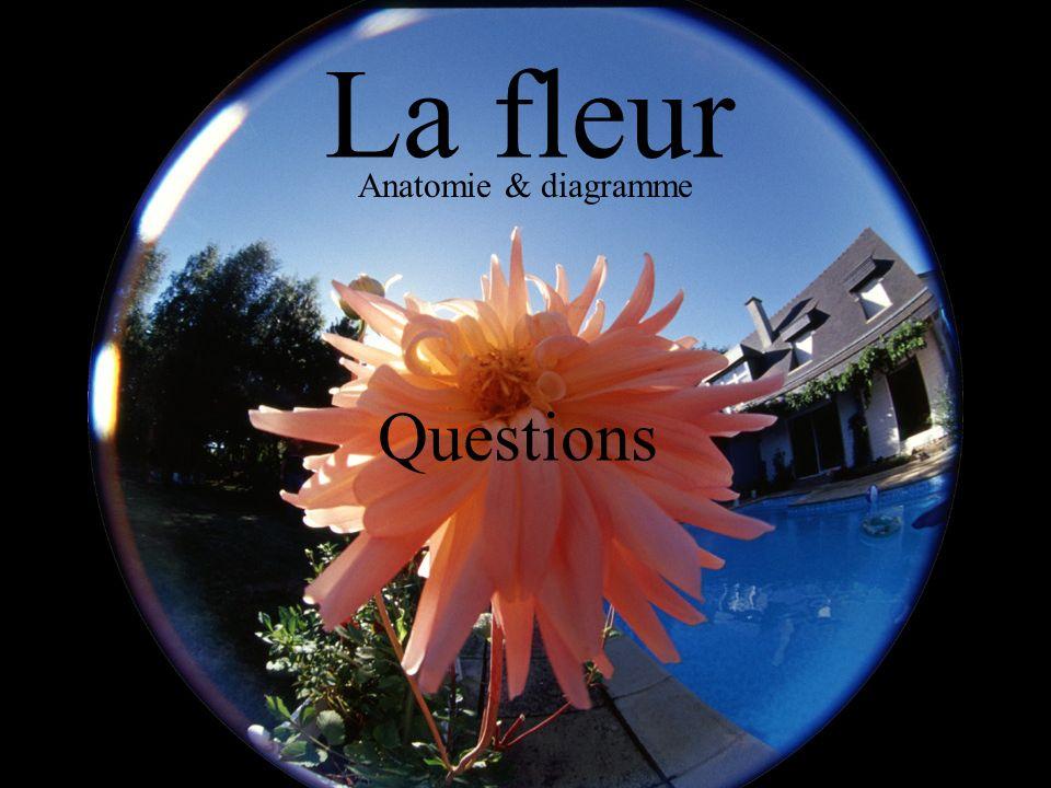 La fleur Anatomie & diagramme Questions