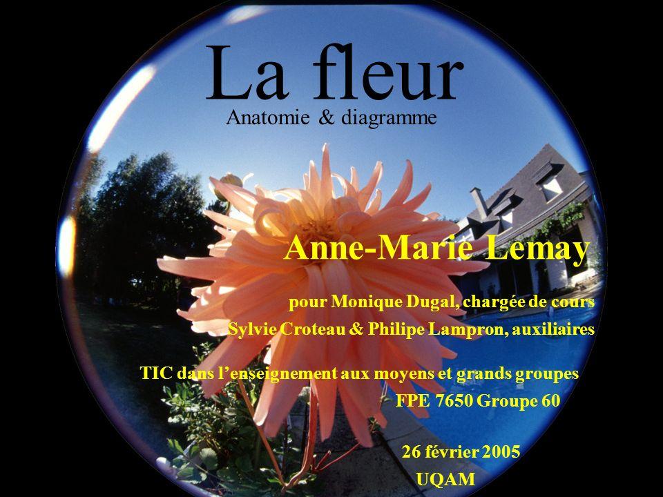 La fleur Anatomie & diagramme pour Monique Dugal, chargée de cours 26 février 2005 Sylvie Croteau & Philipe Lampron, auxiliaires Anne-Marie Lemay FPE