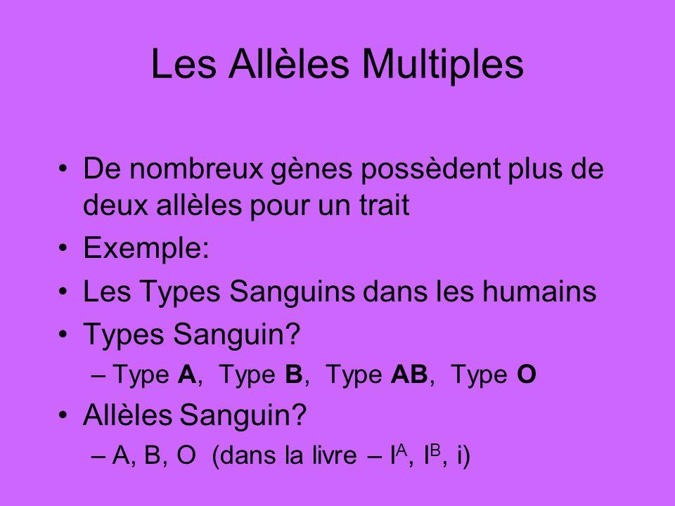 Les Allèles Multiples De nombreux gènes possèdent plus de deux allèles pour un trait Exemple: Les Types Sanguins dans les humains Types Sanguin? –Type