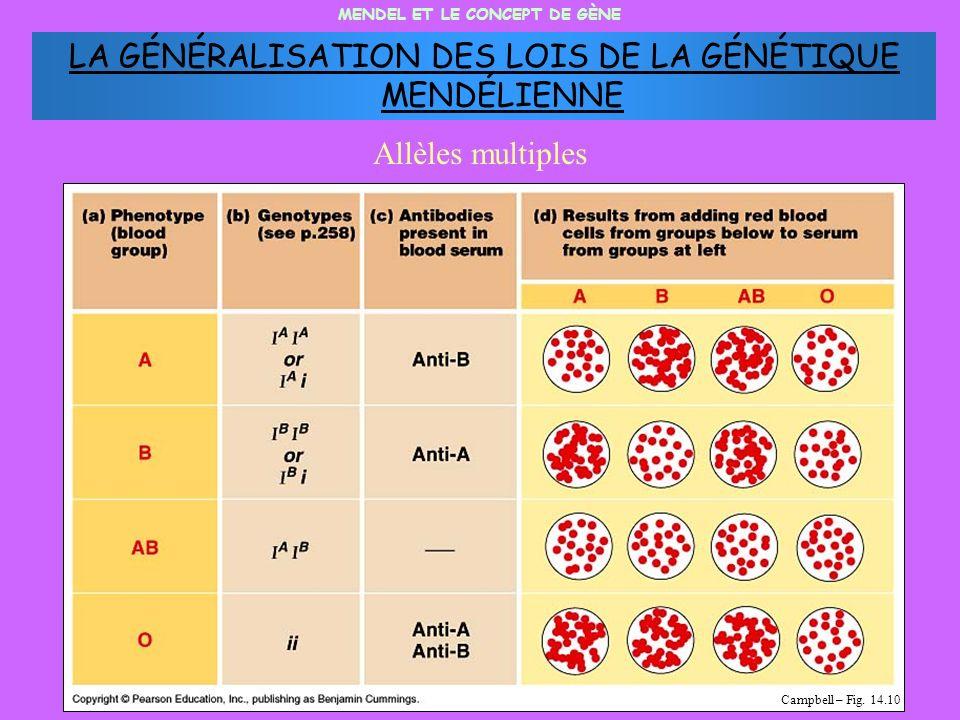 MENDEL ET LE CONCEPT DE GÈNE Allèles multiples Campbell – Fig. 14.10 LA GÉNÉRALISATION DES LOIS DE LA GÉNÉTIQUE MENDÉLIENNE