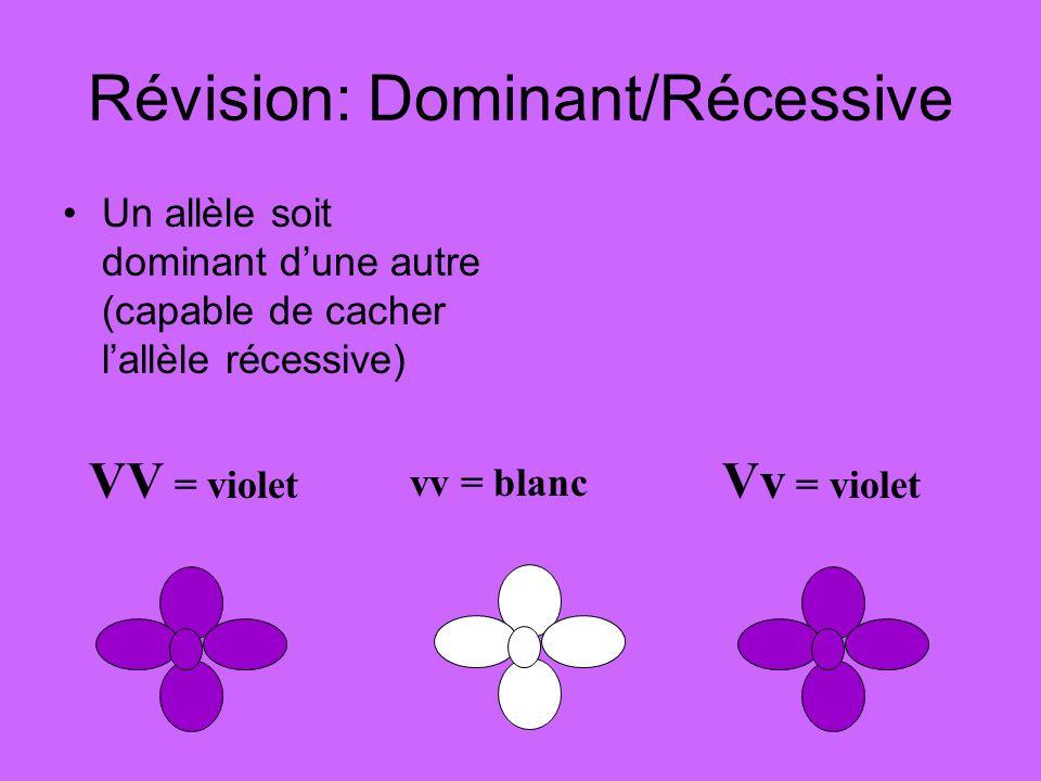 Révision: Dominant/Récessive Un allèle soit dominant dune autre (capable de cacher lallèle récessive) VV = violet vv = blanc Vv = violet