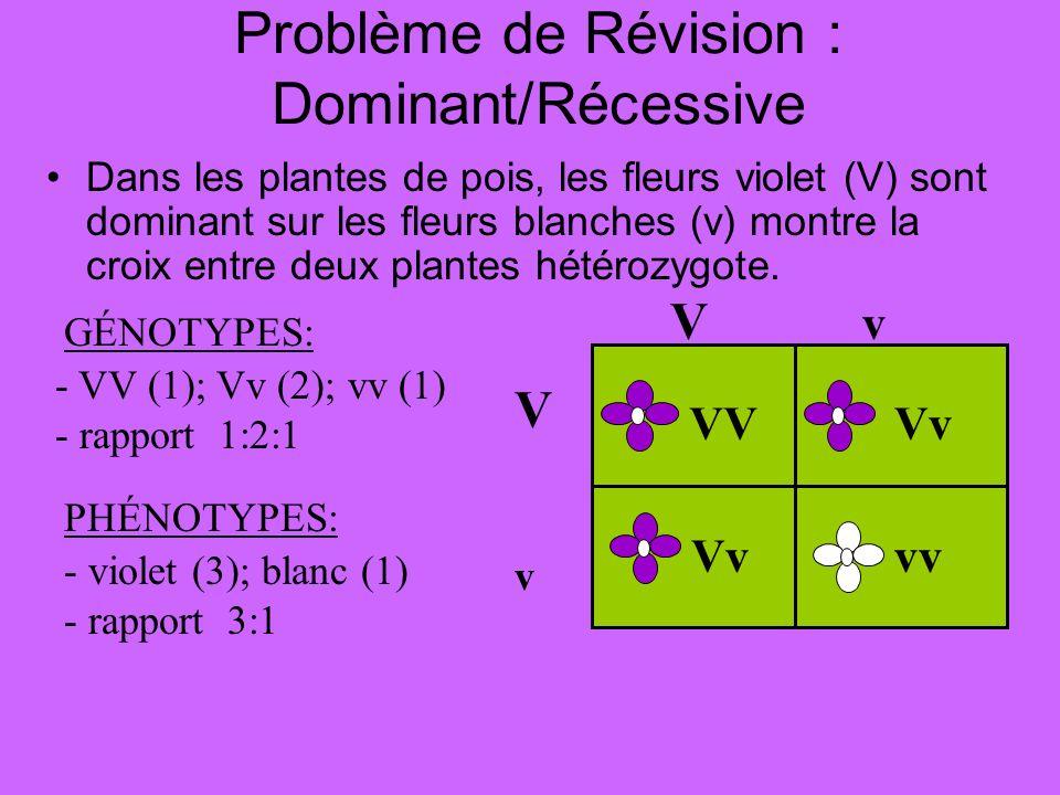 Problème de Révision : Dominant/Récessive Dans les plantes de pois, les fleurs violet (V) sont dominant sur les fleurs blanches (v) montre la croix en