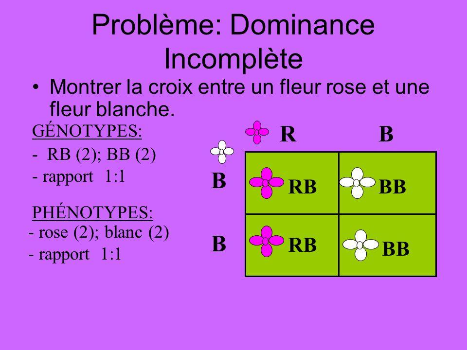 Problème: Dominance Incomplète Montrer la croix entre un fleur rose et une fleur blanche. - RB (2); BB (2) - rapport 1:1 - rose (2); blanc (2) - rappo