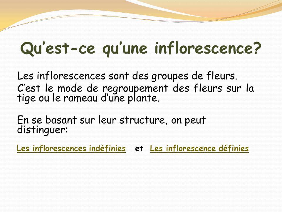 Quest-ce quune inflorescence? Les inflorescences sont des groupes de fleurs. Cest le mode de regroupement des fleurs sur la tige ou le rameau dune pla