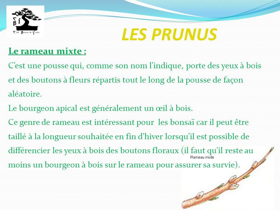 LES PRUNUS Le rameau mixte : Cest une pousse qui, comme son nom lindique, porte des yeux à bois et des boutons à fleurs répartis tout le long de la po