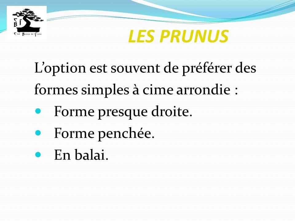 LES PRUNUS Loption est souvent de préférer des formes simples à cime arrondie : Forme presque droite. Forme penchée. En balai.