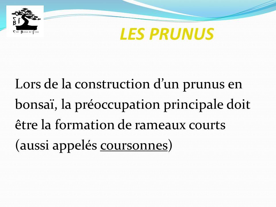 LES PRUNUS Lors de la construction dun prunus en bonsaï, la préoccupation principale doit être la formation de rameaux courts (aussi appelés coursonne
