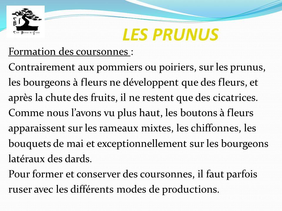 LES PRUNUS Formation des coursonnes : Contrairement aux pommiers ou poiriers, sur les prunus, les bourgeons à fleurs ne développent que des fleurs, et