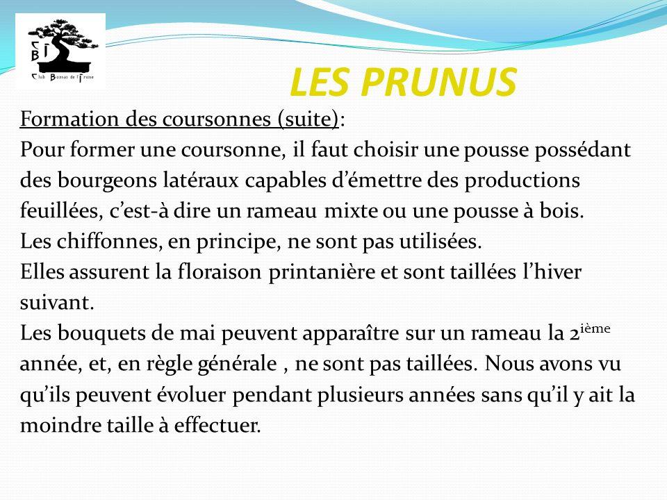 LES PRUNUS Formation des coursonnes (suite): Pour former une coursonne, il faut choisir une pousse possédant des bourgeons latéraux capables démettre