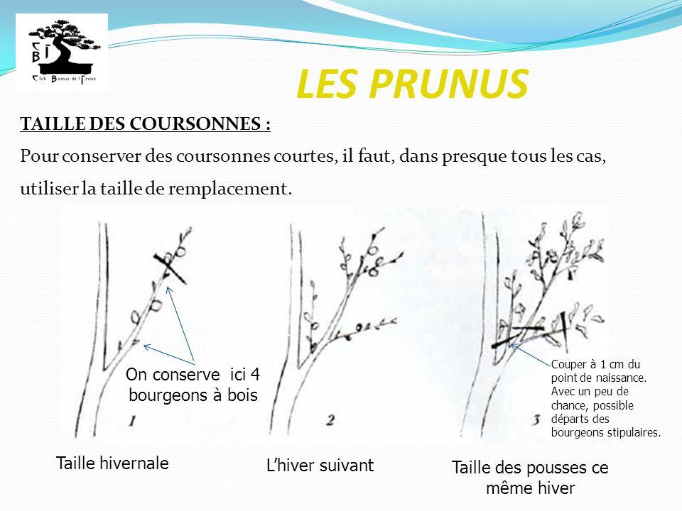 LES PRUNUS TAILLE DES COURSONNES : Pour conserver des coursonnes courtes, il faut, dans presque tous les cas, utiliser la taille de remplacement. Tail