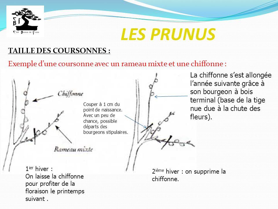 LES PRUNUS TAILLE DES COURSONNES : Exemple dune coursonne avec un rameau mixte et une chiffonne : 1 ier hiver : On laisse la chiffonne pour profiter d
