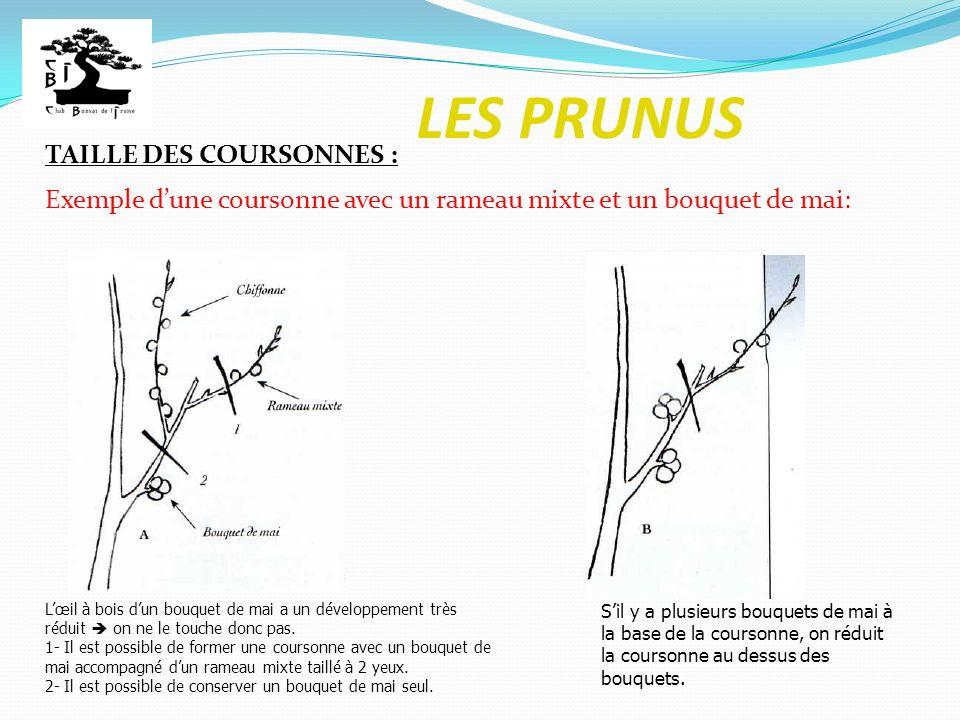LES PRUNUS TAILLE DES COURSONNES : Exemple dune coursonne avec un rameau mixte et un bouquet de mai: Lœil à bois dun bouquet de mai a un développement