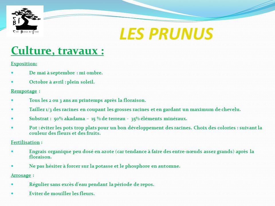 LES PRUNUS Les prunus habituellement travaillés en bonsaï : Prunier Prunus spinosa (prunellier ou épine noire) Petit arbuste épineux (les épines sont,en fait, des rameaux courts).
