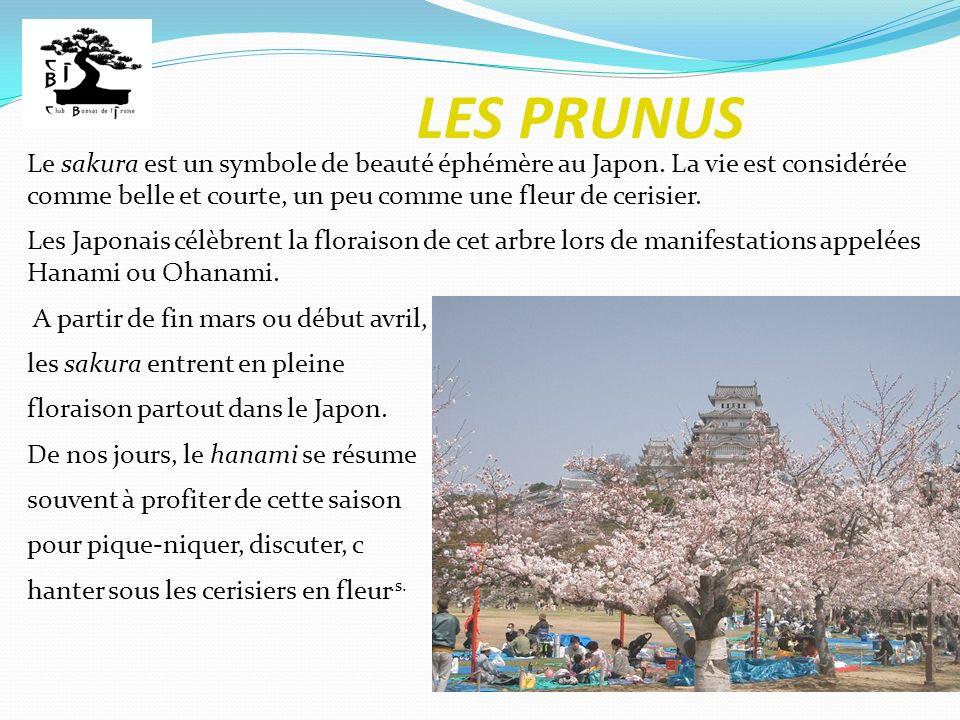 LES PRUNUS Le sakura est un symbole de beauté éphémère au Japon. La vie est considérée comme belle et courte, un peu comme une fleur de cerisier. Les