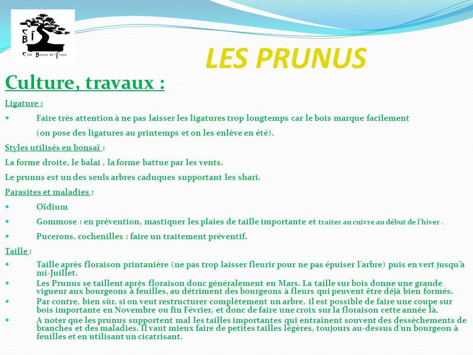 LES PRUNUS Les prunus habituellement travaillés en bonsaï : Prunier Prunier domestique (ex : mirabellier)