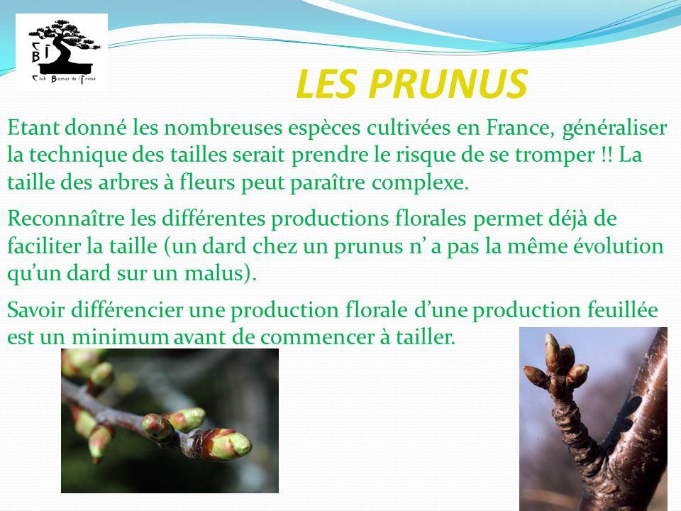 LES PRUNUS Etant donné les nombreuses espèces cultivées en France, généraliser la technique des tailles serait prendre le risque de se tromper !! La t